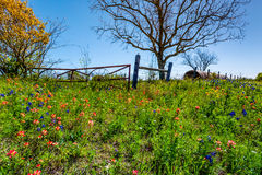 A Meadow with Round Hay Bales and Fresh Texas Wildflowers Royalty Free Stock Images