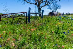 A Meadow with Round Hay Bales and Fresh Texas Wildflowers Stock Photography
