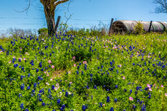 A Meadow with Round Hay Bales and Fresh Texas Wildflowers Stock Photos