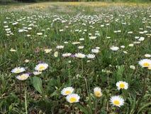 Meadow. A meadow - rovinj - istria - croatia Stock Photography