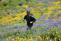 Meadow runner. A runner makes his way across a trail and hillside of wildflowers photographed using motion panning Royalty Free Stock Photos