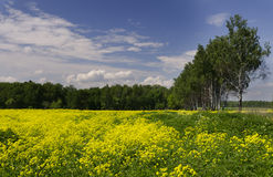 Meadow in Russia Stock Photo