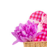 Meadow saffron and gift box Stock Image
