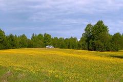 meadow samochodów Zdjęcia Royalty Free
