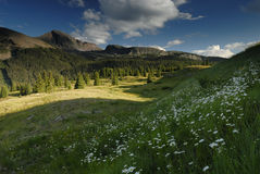 Meadow in San Juan Mountains in Colorado Royalty Free Stock Image