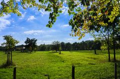 Meadow with scattered fruit trees Royalty Free Stock Photo