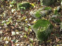 Meadow setting with mossy rocks in dappled shade. Dappled shade mossy rocks closeup in fall and leaves on the ground unkept trail closeup picture stock images