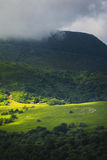 Meadow with sheeps in grass, Auvergne landscape and Puy de Dome Stock Photos