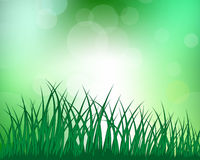 Meadow silhouettes. Vector grass silhouettes on blurred background with reflection in water . All objects are separated Royalty Free Stock Photography