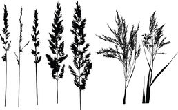 Meadow silhouettes,grass. Vector grass silhouettes on a white background Stock Image