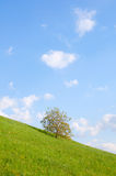 Meadow with Single Tree Royalty Free Stock Image