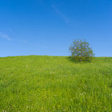 Meadow with Single Tree Royalty Free Stock Photos