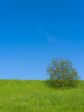 Meadow with Single Tree Stock Image
