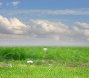 Meadow and sky Stock Image