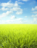 Meadow and sky. Landscape of green meadow, clouds and blue sky Royalty Free Stock Photos