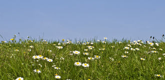 Meadow sky. Meadow grass and flowers against a clear blue sky Stock Photography