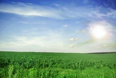 Meadow and sky royalty free stock image