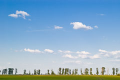 Meadow and sky. Meadow with trees at horizon and blue sky Royalty Free Stock Images