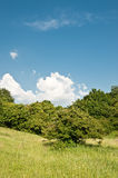 Meadow and the sky. A rural landscape in summertime of year Royalty Free Stock Photo