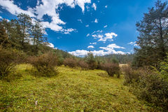 Meadow and sky. Alpine forest at an altitude of over 2,000 meters Stock Photos