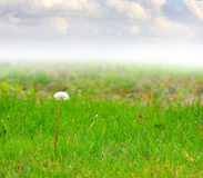 Meadow and sky Royalty Free Stock Photography