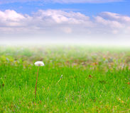 Meadow and sky Royalty Free Stock Photo