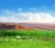 Meadow and sky Stock Images