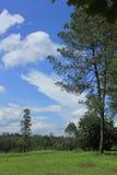 Meadow and the sky. Grassland savannah in Phetchabun Thailand royalty free stock image