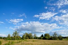 Meadow and sky. Meadow with its growing bushes and blue sky with clouds Royalty Free Stock Image