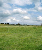 Meadow and sky. Spring meadow and clouds in sky Royalty Free Stock Photos
