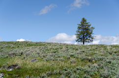 Meadow, sky and tree Stock Photos
