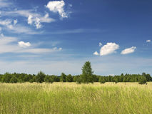 Meadow sky and trees Stock Images