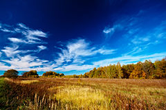 Meadow sky and trees Stock Photos