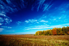 Meadow sky and trees Stock Photography