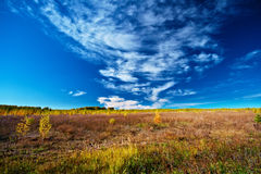 Meadow sky and trees Royalty Free Stock Image