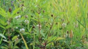 Meadow. Slider shot of lush vegetation in meadow stock footage