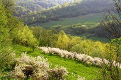 Meadow on a slope of a mountain. A beginning of spring in mountains Royalty Free Stock Image