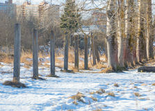 Meadow with snow, the prospect, concrete poles and trees Royalty Free Stock Photos