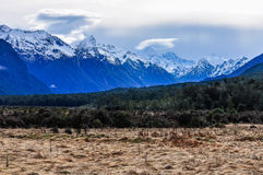 Meadow and snowy peaksd on Milford Road, New Zealand Stock Photography