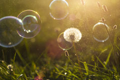 Meadow and soap bubbles Royalty Free Stock Photography