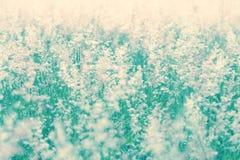 Meadow soft vintage color tone. Meadow soft blue vintage color tone Stock Photos