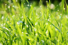 Meadow in spangling dew Stock Photo