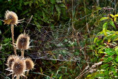 Meadow spider web Stock Images