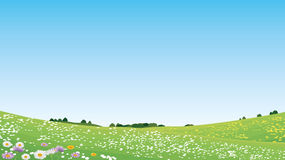 Meadow. Spring Meadow-beauty of Nature-landscape royalty free illustration