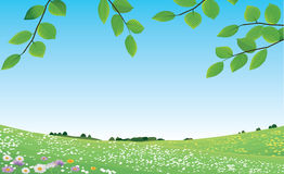 Meadow. Spring Meadow-beauty of Nature-landscape vector illustration