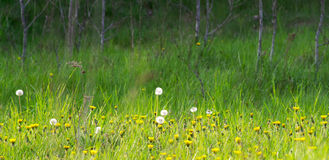 Meadow in spring Stock Image