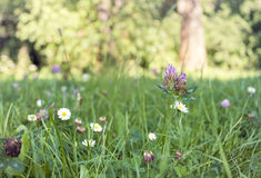 Meadow in spring. Flowers and butterflys Royalty Free Stock Photo