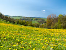 Meadow of spring flowers Royalty Free Stock Image