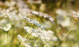 Meadow spring season Royalty Free Stock Images