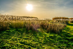 Meadow in spring with sun in the background. Meadow in spring with the sun in the background stock photos